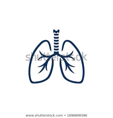 Human Lungs Symbol Stock photo © 5xinc
