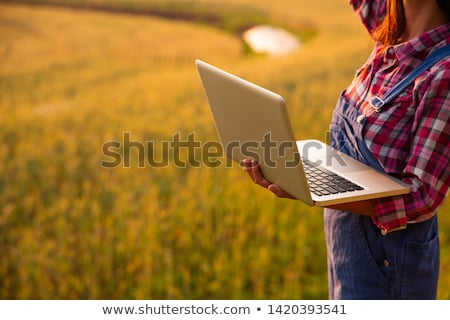 Kobiet rolnik pszenicy wole dziedzinie Zdjęcia stock © stevanovicigor