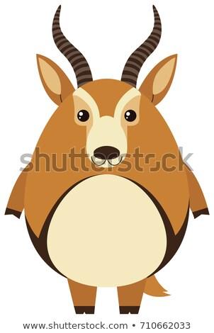 Cute газель тело иллюстрация улыбка искусства Сток-фото © bluering
