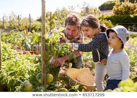 A family working in a vegetable garden Stock photo © IS2