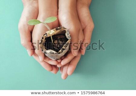 öko élet emberi kéz tart faág környezeti Stock fotó © psychoshadow