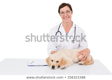 caucasian white veterinarian examining dog stock photo © rastudio
