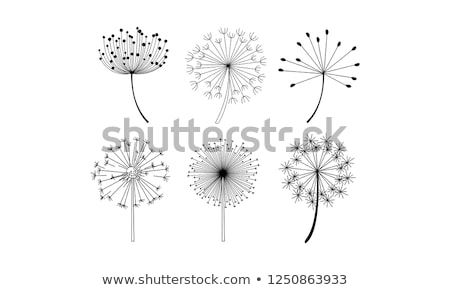 dandelion silhouette with white background stock photo © barbaliss
