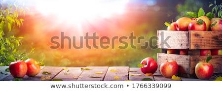 oogst · tijd · vers · appels · mand · voedsel - stockfoto © ustofre9