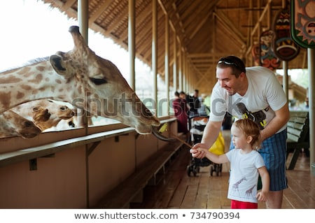 Stock fotó: Father And Son Watching And Feeding Giraffe In Zoo Happy Kid Having Fun With Animals Safari Park On