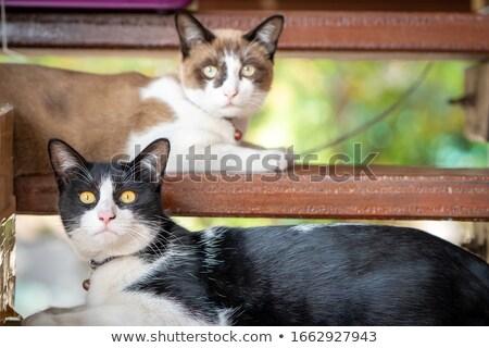 Peludo gato dormir escaleras retrato rojo Foto stock © galitskaya