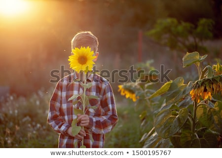 bambino · giocare · girasole · campo · sereno · estate - foto d'archivio © dashapetrenko