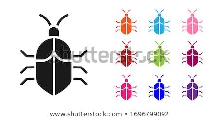 Bug code vector zoeken achtergrond veiligheid Stockfoto © kyryloff