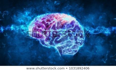 neurology anatomy stock photo © lightsource