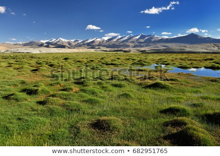 Panorama of Himalayan lake Tso Kar in Himalayas, Ladakh, India Stock photo © dmitry_rukhlenko