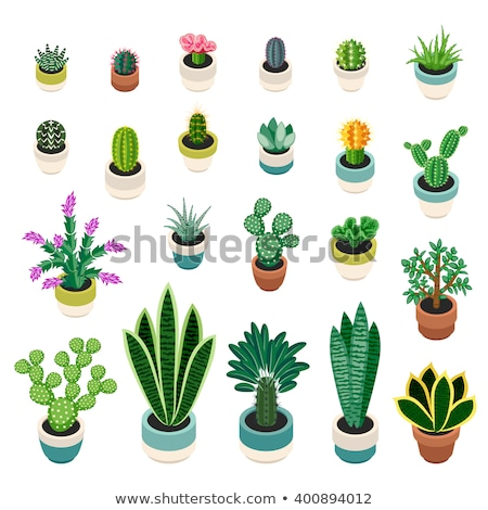 Big Cactus, Plant in Pot with Thorns, Houseplant Stock photo © robuart