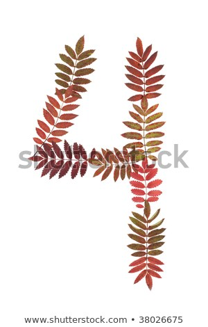 Numeral four 4 put from autumn sheet Stock photo © RuslanOmega