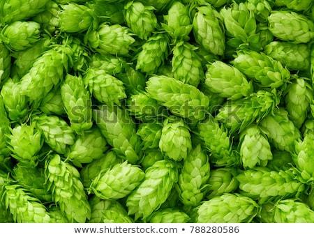 Stock photo: Hops