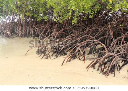 árbol árboles Tailandia krabi forestales Foto stock © smithore
