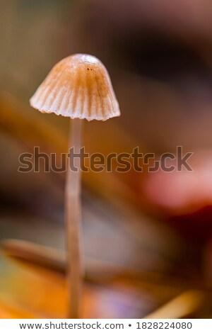étel · erdő · ősz · gomba · gombák · hozzávaló - stock fotó © asturianu