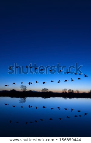 Bird Formation in Sunset Stock photo © Alvinge