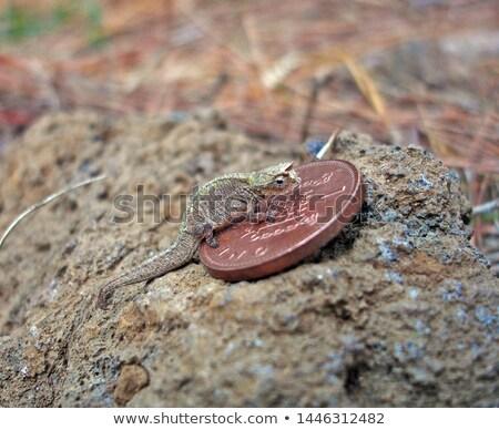Dwerg kameleon afrikaanse natuur voeten witte Stockfoto © EcoPic