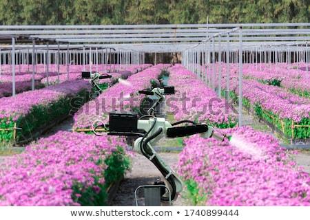 Robot bloem illustratie mannelijke vrouwelijke liefde Stockfoto © lenm