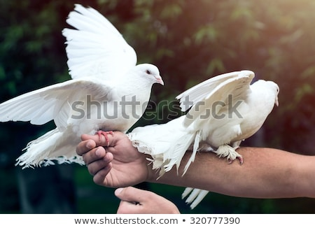 Cute para ptaków kobieta twarz człowiek Zdjęcia stock © konradbak