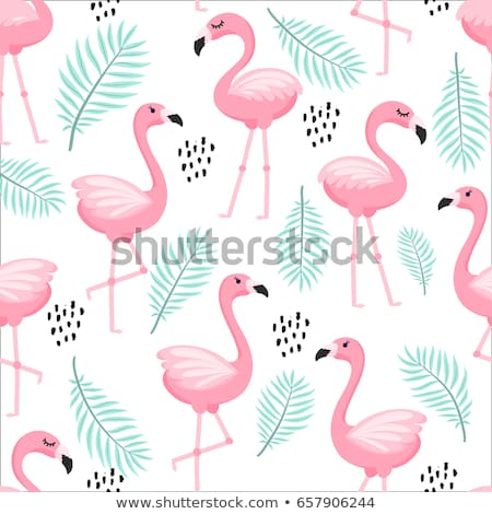 Flamingo patroon vogel roze Stockfoto © ayelet_keshet