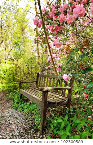 Beautiful romantic garden with wooden bench and azalea trees Stock photo © Julietphotography