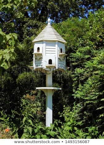 Bois maison oiseaux Photo stock © russwitherington