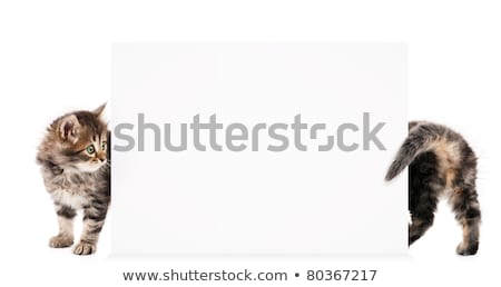 cat with blank card stock photo © lightsource