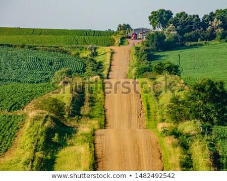 Айова · трактора · работу · урожай · кукурузы - Сток-фото © actionsports