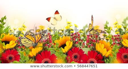 kolor · lata · plakat · kwiat · ogród · tle - zdjęcia stock © adamson