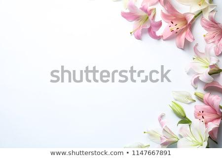 Лилия цветок оранжевый изолированный белый Сток-фото © Kayco