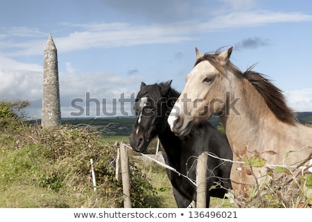 pair of irish horses and ancient round tower stock photo © morrbyte