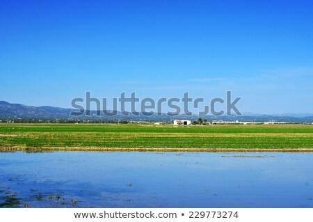 Campo delta Espanha ver água paisagem Foto stock © nito