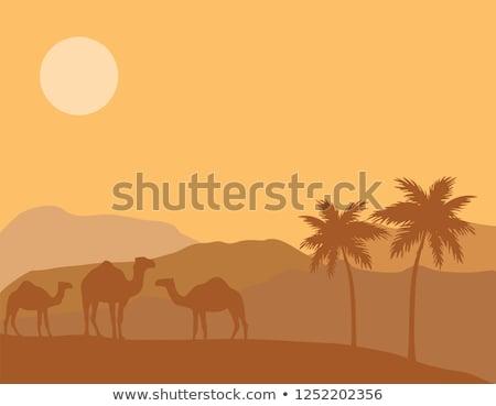 Foto stock: Deserto · ilustração · palms · verão · natureza