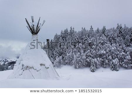 winter in grey Stock photo © marinini