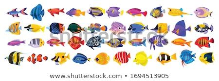 hal · citromsárga · trópusi · Vörös-tenger · természet · tenger - stock fotó © goinyk