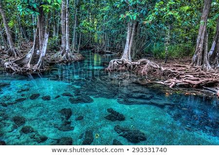 Esmeralda azul piscina krabi Tailandia asombroso Foto stock © goinyk