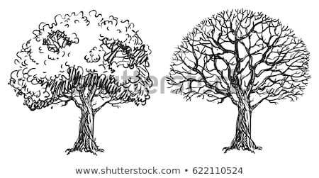 Silhouette of tree without leaf 2 Stock photo © clairev