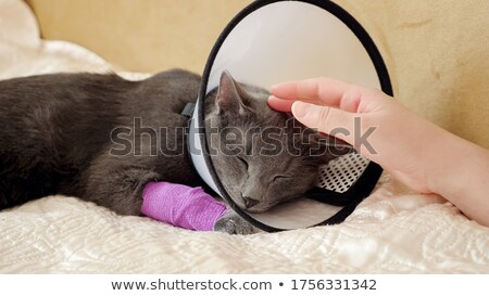 Stock photo: Injured Cat