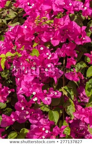 ストックフォト: ピンク · エジプト · 美 · 青空 · 空 · 夏