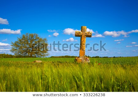 The Way of Saint James cross Palencia cereal field Stock photo © lunamarina