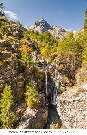 Cascada camino córcega rocas montanas pino Foto stock © Joningall