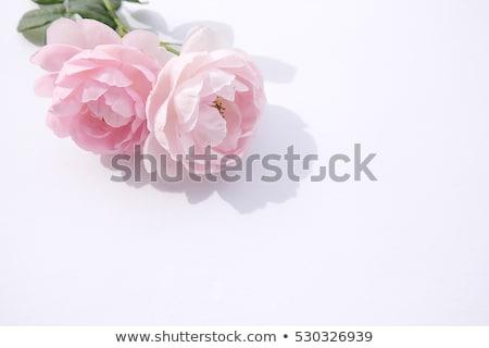 Rózsák virágcsokor valentin nap rózsaszín absztrakt elegancia Stock fotó © boroda