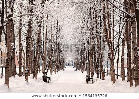 ensolarado · inverno · dia · parque · estrada · madeira - foto stock © steffus