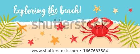 Deniz yengeç plaj okyanus kum hayat Stok fotoğraf © bank215