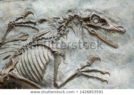 животного землю мертвых грязи рисунок Cartoon Сток-фото © bluering