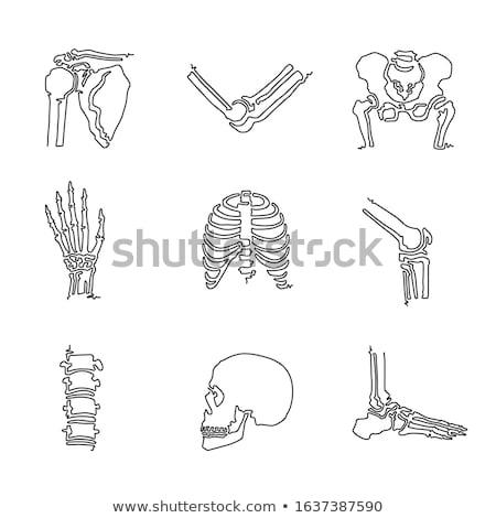 części · ciała · nowoczesne · proste · cienki · line · projektu - zdjęcia stock © decorwithme