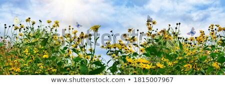 artichoke flower in summer garden Stock photo © compuinfoto