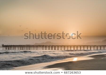 Zdjęcia stock: Ptaków · latać · wygaśnięcia · plaży · Święty · mikołaj · słońce