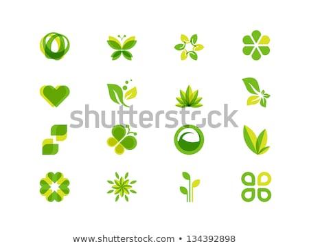 бабочка · зеленые · листья · логотип · символ · икона · вектора - Сток-фото © gothappy