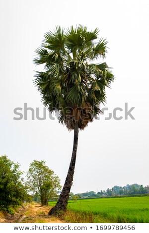 Roches mer krabi arbre herbe nature Photo stock © Pakhnyushchyy